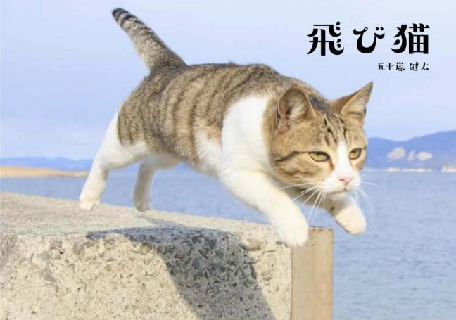 飛び猫の凛々しい姿がにゃんだふる♡フクロウと子猫の仲良しコンビも♪五十嵐健太「飛び猫 写真展」