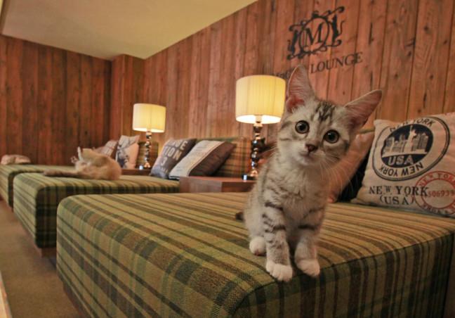 猫と過ごすリラックスタイム♡おしゃれすぎる猫カフェMoCHAは私たちも猫もゆ~ったり過ごせちゃう幸せ空間です♪