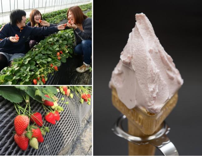 春のいちご狩りは日本最大規模の 「いちごの里」に行こう♪1粒500円以上するスカイベリーを使用したプレミアムなジェラートも楽しめる♡