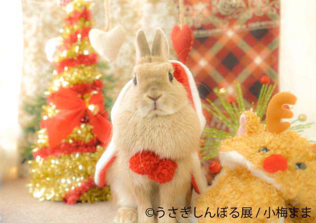 モフモフなうさぎたちに心が温まる♡うさぎのクリスマスムード溢れる作品がいっぱい♪東京・新橋の「うさぎしんぼる展」